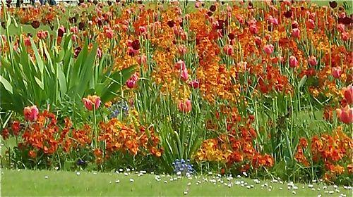 Flowers in the Tuilleries garden