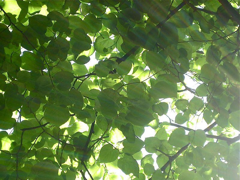 Light play of the sun through the tree