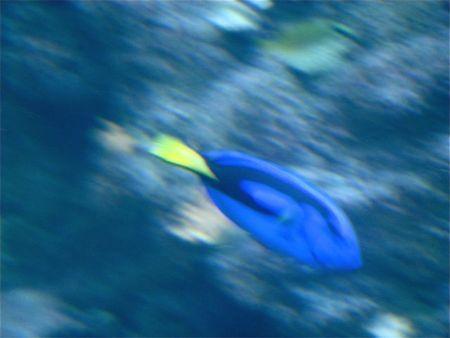 Diving dorrie