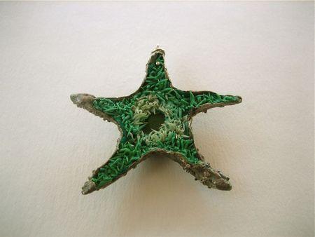 Wendystarfishbottom