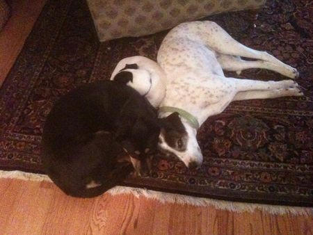 Doggies in a pile