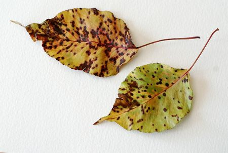 Old leaves & dots