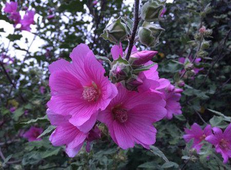 D hot pink flowers 16x11.7