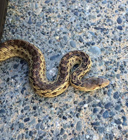 Snake 16x18 655kb