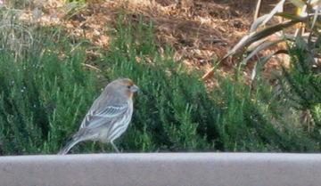 Stalkingbirds2