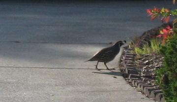 Stalkingbirds3