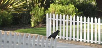Stalkingbirds4