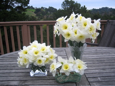 Mydaffodils