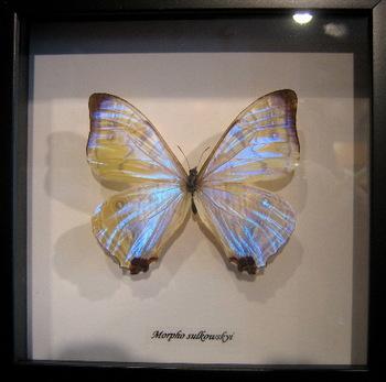 Butterflyfromtheboneroom